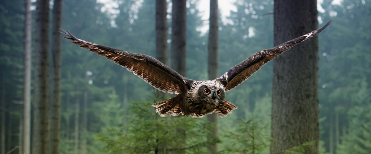 Owl500